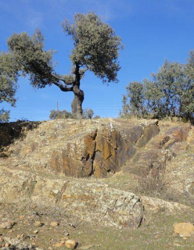 Camino Mozárabe  6