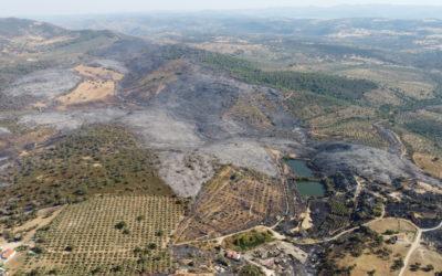 El Ayuntamiento plantea un plan de recuperación de las zonas afectadas por el incendio del Calatraveño